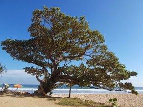 Pantai Pok Tunggal