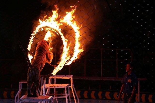 Oriental Circus Indonesia Hibur Masyarakat Yogyakarta
